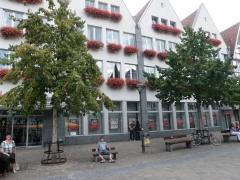 blad nederlandse bomen